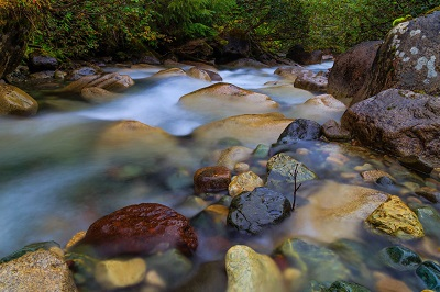 Eight Mile Creek by Jeanine Philippe